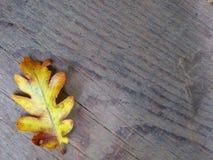 Foglia di autunno su fondo di legno Fotografie Stock Libere da Diritti