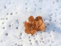 Foglia di autunno su neve Fotografia Stock