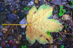Foglia di autunno su terra Fotografia Stock
