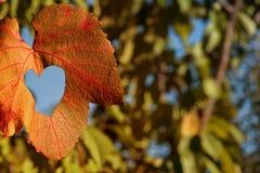 Foglia di autunno su un fondo degli alberi e del cielo blu Fondo della natura della foglia di autunno Il giallo rimane il cielo b immagine stock libera da diritti