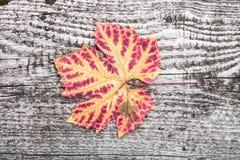 Foglia di autunno sul bordo di legno anziano Fotografia Stock