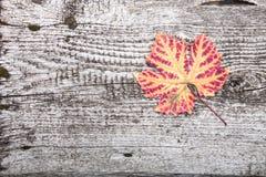 Foglia di autunno sul bordo di legno anziano Immagine Stock Libera da Diritti