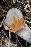 Foglia di autunno sul cerchio fotografie stock libere da diritti