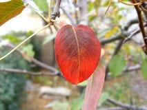 Foglia di autunno sul ramo Fotografie Stock Libere da Diritti