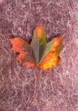 Foglia di autunno sul tessuto lanuginoso della lana Fotografia Stock