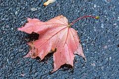 Foglia di autunno sull'asfalto Fotografia Stock