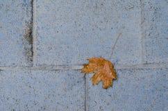 Foglia di autunno sulla pavimentazione Fotografia Stock Libera da Diritti