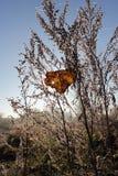 Foglia di autunno in un'erba asciutta Fotografia Stock Libera da Diritti