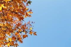 Foglia di autunno, vecchie foglie di acero arancio, fogliame asciutto degli alberi, fuoco molle, stagione di autunno, un cambiame fotografia stock