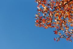 Foglia di autunno, vecchie foglie di acero arancio, fogliame asciutto degli alberi, fuoco molle, stagione di autunno, un cambiame Immagini Stock Libere da Diritti