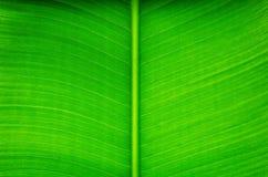 Foglia di Banan Fotografie Stock