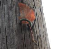 Foglia di caduta attaccata nel palo di elettricità Fotografia Stock