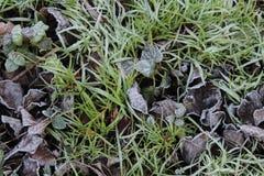 Foglia di caduta su erba fotografie stock