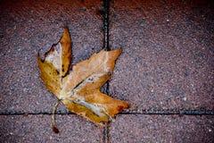 Foglia di caduta su pavimentazione Fotografie Stock Libere da Diritti