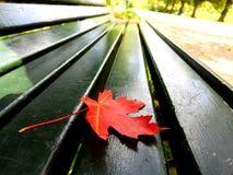 Foglia di caduta su un banco di parco Fotografia Stock