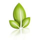 Foglia di Eco Immagine Stock