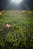 Foglia di mattina Fotografia Stock Libera da Diritti