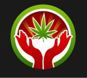Foglia di meraviglia di marijuana Fotografia Stock