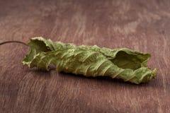 Foglia di Mitragyna sul di legno Fotografie Stock