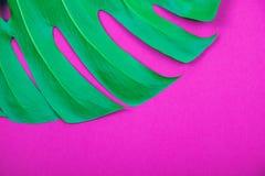 Foglia di monstera di verde della pianta tropicale su fondo rosa di plastica acido immagine stock libera da diritti