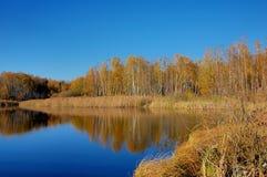 Foglia di oro di autunno Immagini Stock
