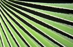 Foglia di palma Immagini Stock