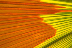 Foglia di palma astratta Immagine Stock Libera da Diritti