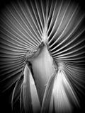 Foglia di palma in bianco e nero Immagini Stock