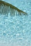 Foglia di palma caraibica Immagini Stock