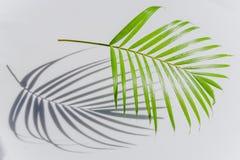 Foglia di palma ed ombre su una parete bianca Fotografia Stock