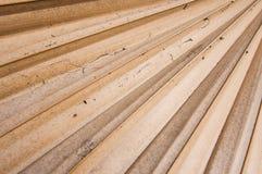 Foglia di palma secca dello zucchero Immagine Stock