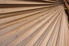 Foglia di palma secca dello zucchero Fotografia Stock