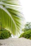 Foglia di palma sul modo. Fotografie Stock