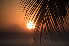 Foglia di palma sul tramonto Immagine Stock