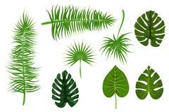 Foglia di palma tropicale del backgroung Fotografia Stock