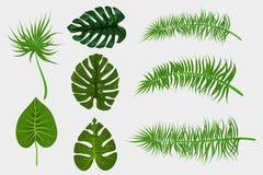 Foglia di palma tropicale del backgroung Immagini Stock Libere da Diritti