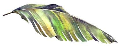 Foglia di palma tropicale della banana illustrazione vettoriale