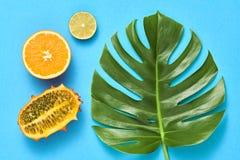 Foglia di palma tropicale, frutti Insieme luminoso di estate vegan Immagini Stock