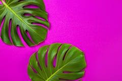 Foglia di palma tropicale verde su fondo colorato rosa Stile minimo di disposizione del piano Vista sopraelevata e superiore, spa Immagini Stock Libere da Diritti
