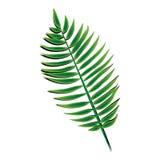 Foglia di palma verde Fotografie Stock