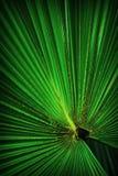 Foglia di palma verde del poggiapiedi Immagine Stock Libera da Diritti