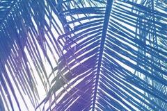 Foglia di palma verde sopra il fondo del cielo Bella foto di foglia di palma con il tono di effetto dell'arcobaleno Fotografia Stock Libera da Diritti
