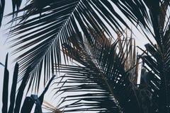 Foglia di palma verde sopra il fondo del cielo Fondo delle foglie di palma Stampa d'annata o manifesto della natura tropicale Immagini Stock Libere da Diritti