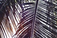 Foglia di palma verde sul fondo del cielo di tramonto Bella foto di foglia di palma sul tramonto Fotografie Stock Libere da Diritti