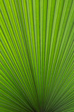 Foglia di palma verde version2 Immagine Stock Libera da Diritti