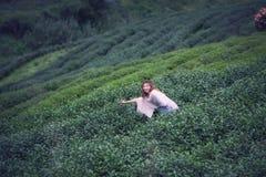 Foglia di tè asiatica di raccolto della donna in piantagione, Th della montagna di Angkhang Fotografie Stock Libere da Diritti