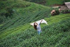 Foglia di tè asiatica di raccolto della donna in piantagione, Th della montagna di Angkhang Fotografie Stock