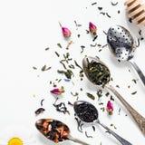 Foglia di tè, di erbe secchi e tè verde in cucchiaini Fotografia Stock