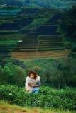 Foglia di tè felice asiatica di raccolto della donna nel campo sul moun di Angkhang di doi Fotografia Stock Libera da Diritti