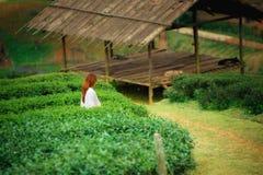 Foglia di tè felice asiatica di raccolto della donna nel campo sul moun di Angkhang di doi Immagini Stock Libere da Diritti